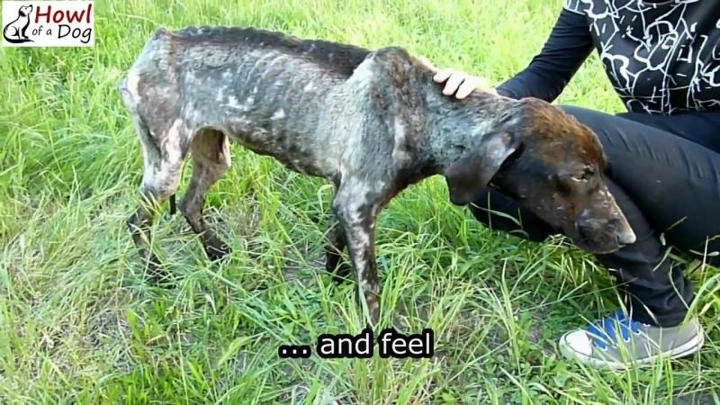 История спасения собаки, которая жила в клетке