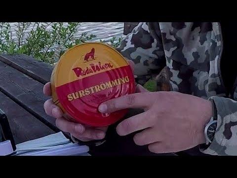 Сюрстрёмминг - полное руководство. Surströmming - complete guide.