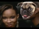 [Funny video] Hey, how you doing let me whisper in your ear - Pug Edition!