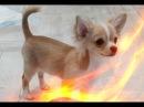Приколы про животных Позитив Смешные кошки собаки Создай себе хорошее настроение