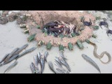 The Best Amazing Top 6 Video About Fishing Trap &amp Crab Trap &amp Eel Trap From KJ Channel