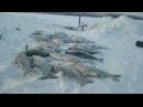 Путешествие на озеро Маган-Кель для ловли пеляди! Якутия Yakutia