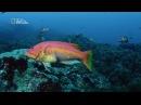 Глубины океана Морские гиганты Азорских островов Документальный фильм