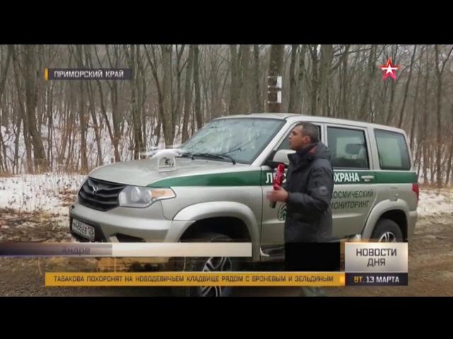 Дроны помогут искать «черных лесорубов» в лесах Приморья