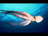 The Art of Trance - Octopus