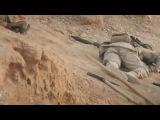 Сирия. Пальмира. Снайпер ликвидировал боевика иг