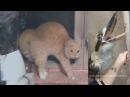 Skrillex - Make It Bun Dem (Animal Cover)