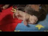 Милота зашкаливет  (котятам 3 дня)