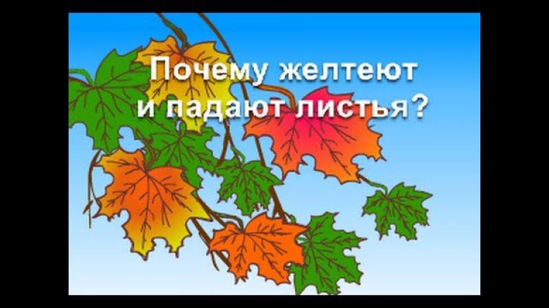 Обучающий мультфильм Почему желтеют и падают листья Развивающий мультик для детей