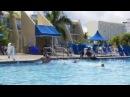 Puerto Rico Vacation Rentals   Vacation Rentals in Puerto Rico ( Atlantic Rose )