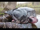 Snakes vs Catfish vsTurtle vs Biggest Crab vs Bird ⇉ King Cobra Attack (Lizard , Mongoose ,Monkey)
