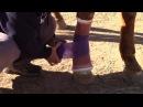 Equine Leg Bandage