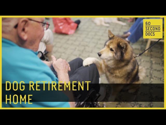 Dog Retirement Home   Silver Muzzle Cottage 60 Second Docs