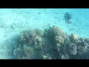 Diving in the red sea Eilat 02 02 18 1