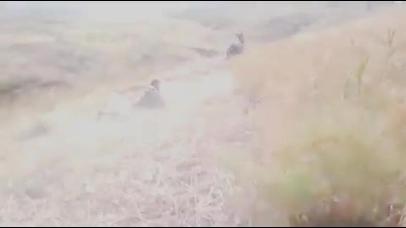 Turkmen prikol eshek (TURKMENMTV)