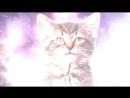 Поющие коты Space_Cats_Magic_Fly