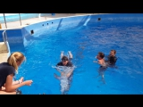 Плавание с дельфинами. Анапа 16.09.2017 год
