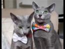 Ебанутые коты