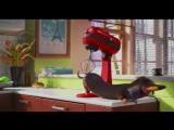 Массаж таксы...(Отрывок из кинофильма: Тайная жизнь домашних животных).