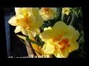 Красивые цветы на даче Клумба цветушая все лето