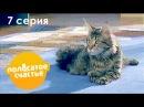Полосатое счастье. 7 серия - Комедийный сериал - СТС сериалы