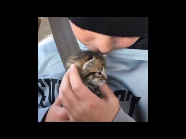 10 year old Boy Comforts Orphaned Kitten and Finds Her a New Cat Mom