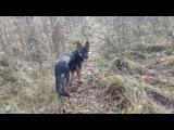 Прогулка по лесу. Поиск поляны…