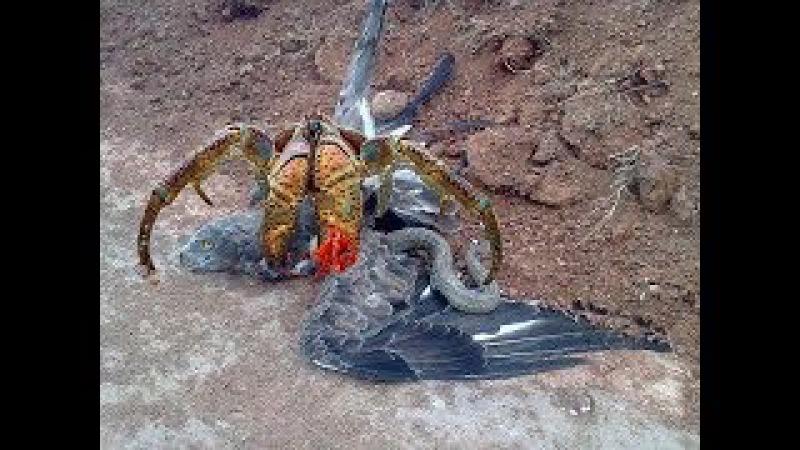 Pha solo thượng đỉnh động vật ntn : Cua dừa , Rắn hổ mang , Đại bàng , Báo , Trăn - bird vs snake