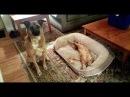 ПОПРОБУЙ НЕ ЗАСМЕЯТЬСЯ - Смешные Приколы и фейлы с Животными до слез, смешные коты 66
