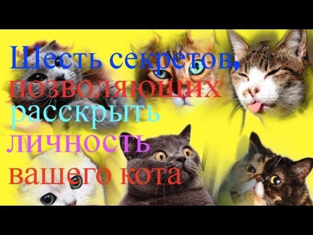 Шесть секретов, позволяющих раскрыть личность вашего кота