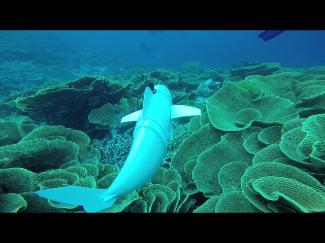 A Robotic Fish Swims in the Ocean / Робот-рыба плавает в океане