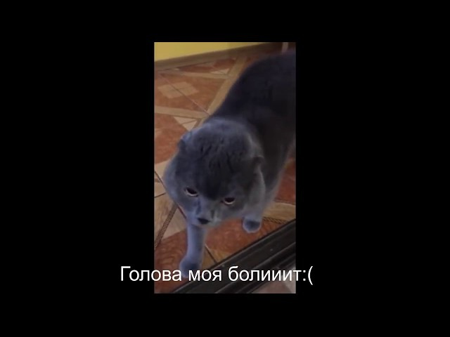 Говорящий кот! Голова болит, и завет Галю!!🔥