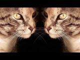 Кошка и человек (рассказывают Елена Гудкова и Константин Перепечаев)