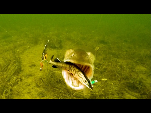 Fishing wt lures pike attacks Pesca del lucio Pêche du brochet Рыбалка щука атакует приманку