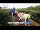 [CC][Engsub] 170803 Wanna One Go EP1 | Romantic drive vs Bean plucking