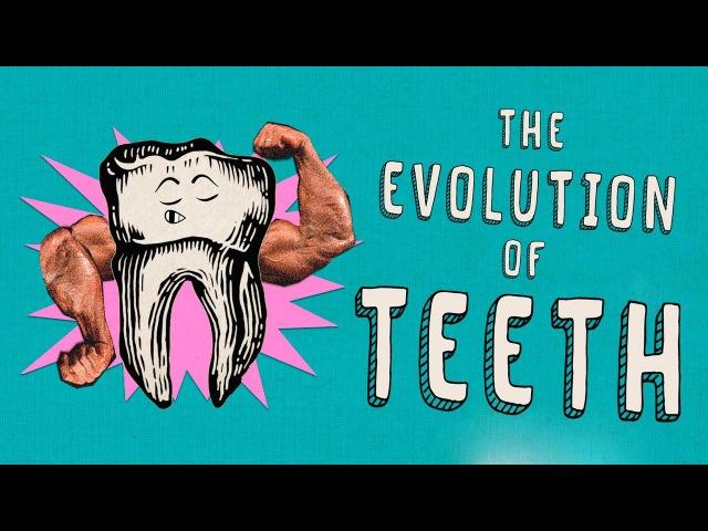 How did teeth evolve Peter S Ungar