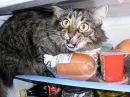Armless cat-Безрукий кот