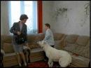 Киножурнал Ералаш • Ералаш №167 Осторожно, злая собака