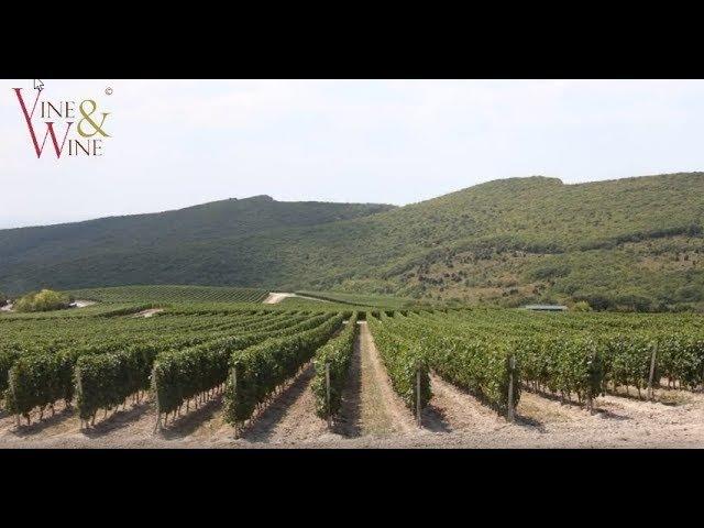 Закладка виноградника / Vineyard layout