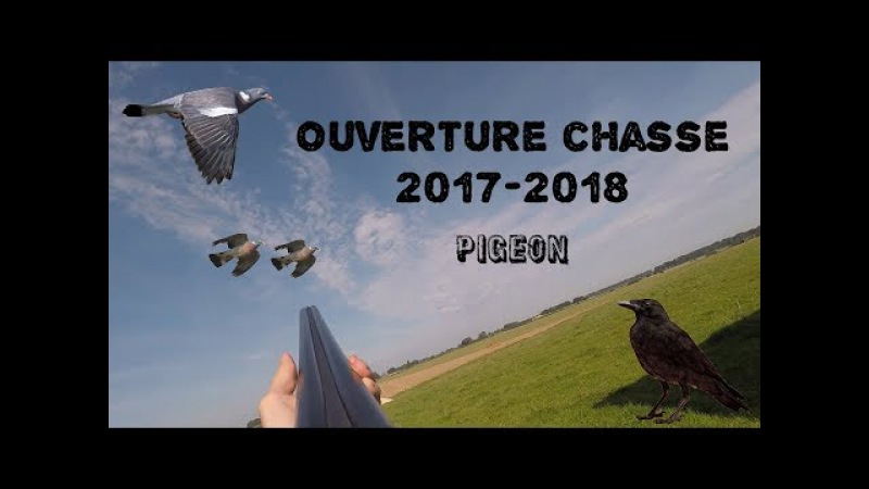 Ouverure chasse 2017 2018 Pigeon corbeau