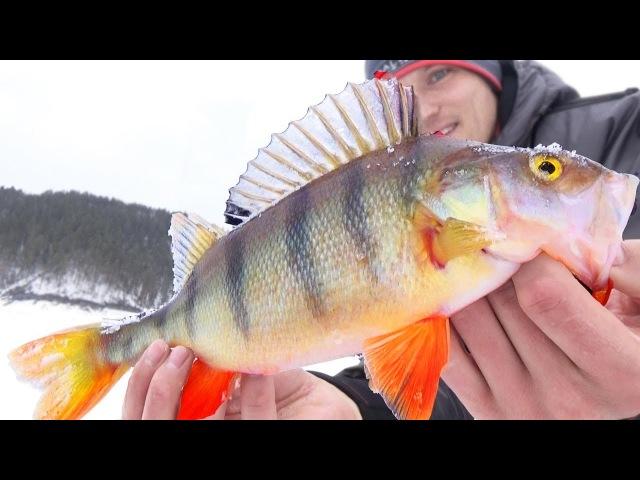 ВОТ ЭТО КОНИ ! Малёк Зуева или блесна с подвеской-светофором Зимняя рыбалка в марте на блесну