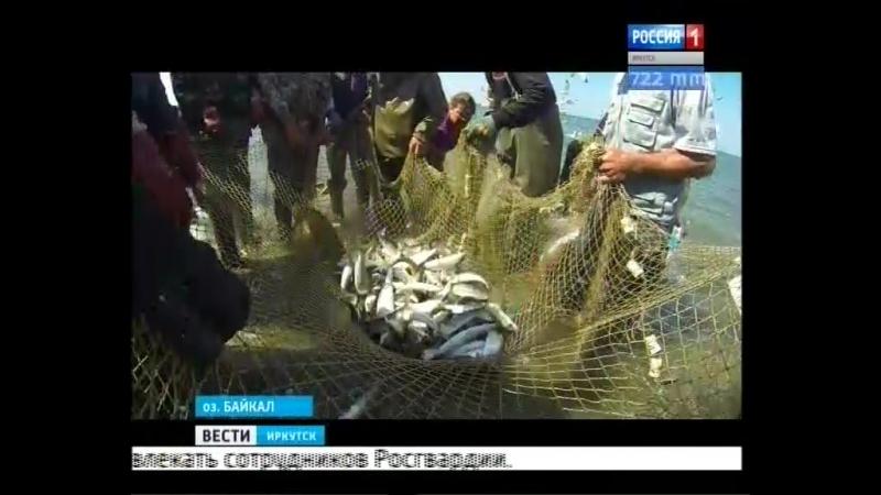 Байкальский омуль запретят добывать уже в октябре 2017 года