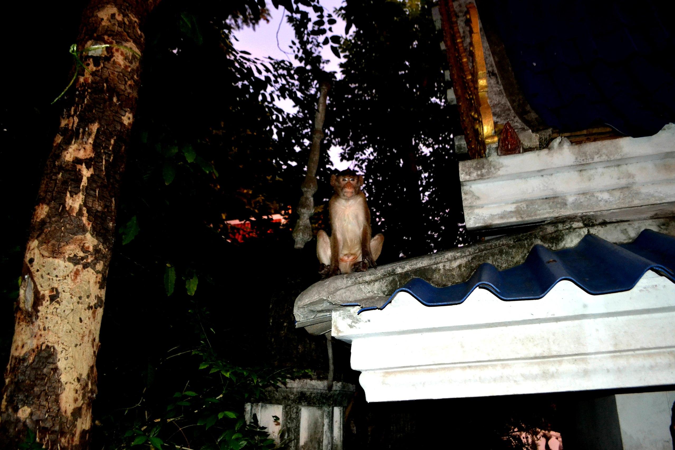 Елена Руденко (Валтея). Таиланд. Таиланд. Paтчaбуpи: Пещера страха, Пещера мышей, Буддийский храм OG3Peebadzw