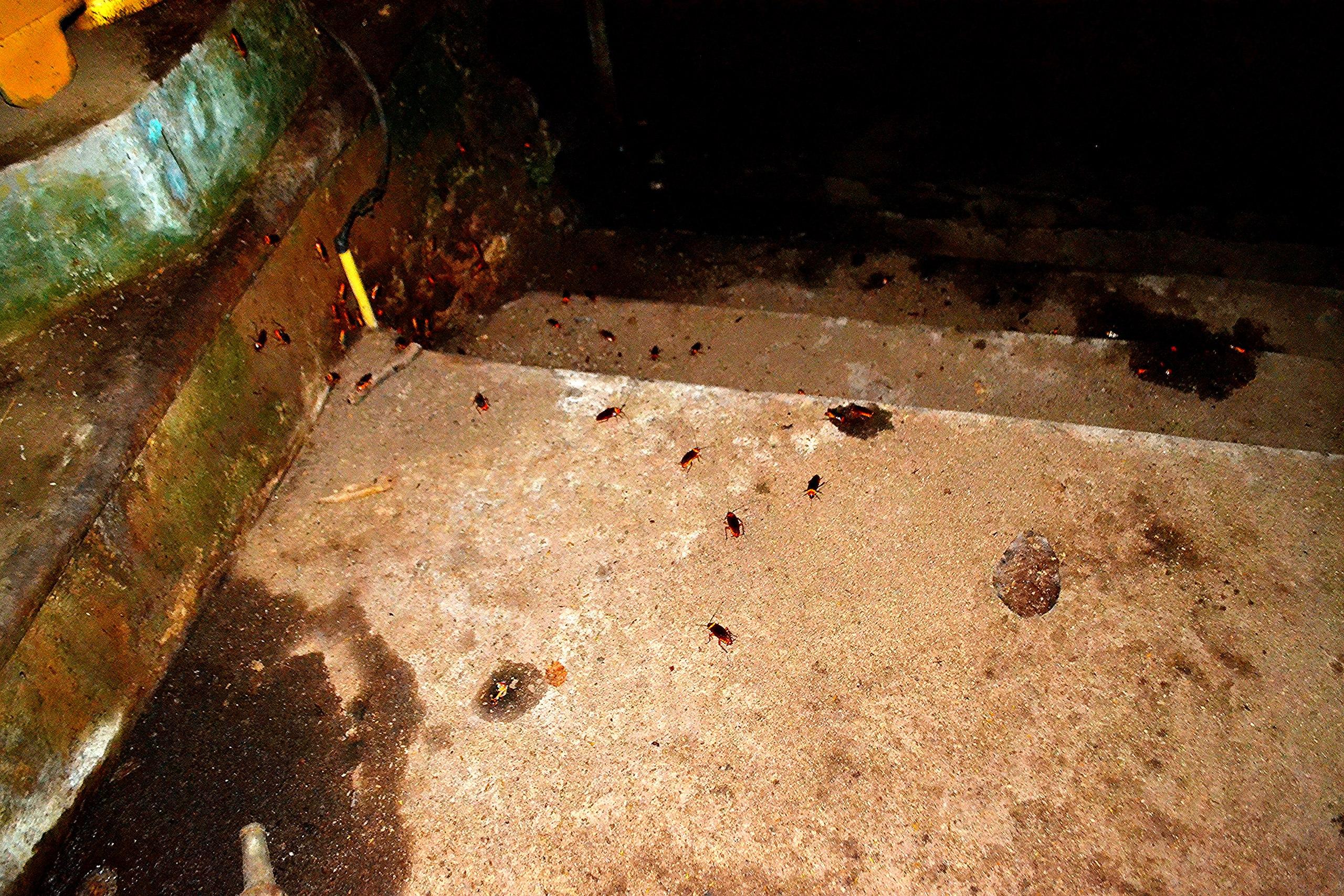 Елена Руденко (Валтея). Таиланд. Таиланд. Paтчaбуpи: Пещера страха, Пещера мышей, Буддийский храм C098Bvt8Uic