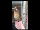 Le chant d'un oiseau.