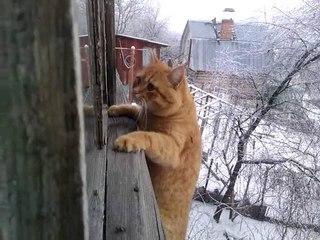 Пиксель - кот