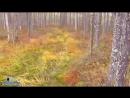 БОЛОТА РОССИИ Типы и виды болот Видео очерк с болот погуляем yklip scscscrp