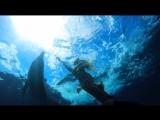 Русалка Мелисса плавает со своими друзьями-дельфинами