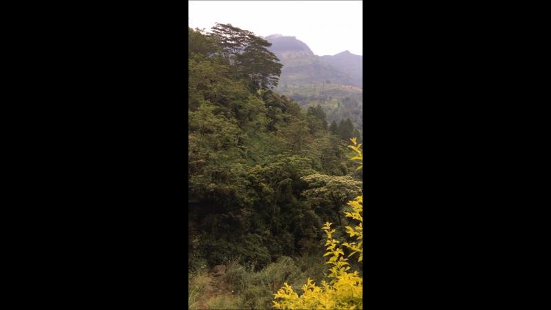 Нувара Элия чайные плантации