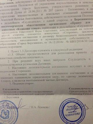 Приют для животных Кошкина Семья г Березники ВКонтакте
